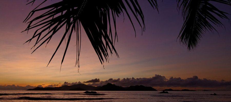 Palm Trees Ocean Tropical Sunset  - HWMedia / Pixabay